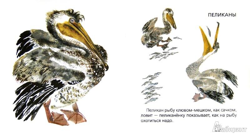 Иллюстрация 1 из 8 для Птицы - Никита Чарушин   Лабиринт - книги. Источник: Лабиринт