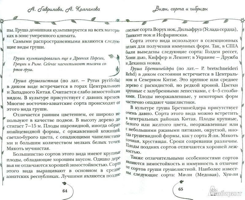 Иллюстрация 1 из 10 для Вишня, слива, абрикос - Колпакова, Гаврилова | Лабиринт - книги. Источник: Лабиринт