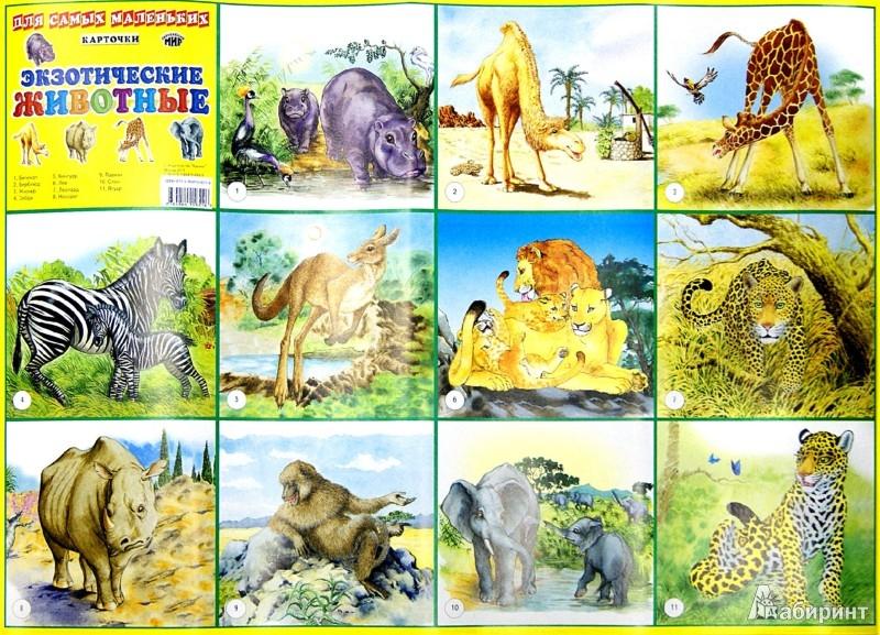Иллюстрация 1 из 3 для Плакат. Экзотические животные. Для самых маленьких | Лабиринт - книги. Источник: Лабиринт