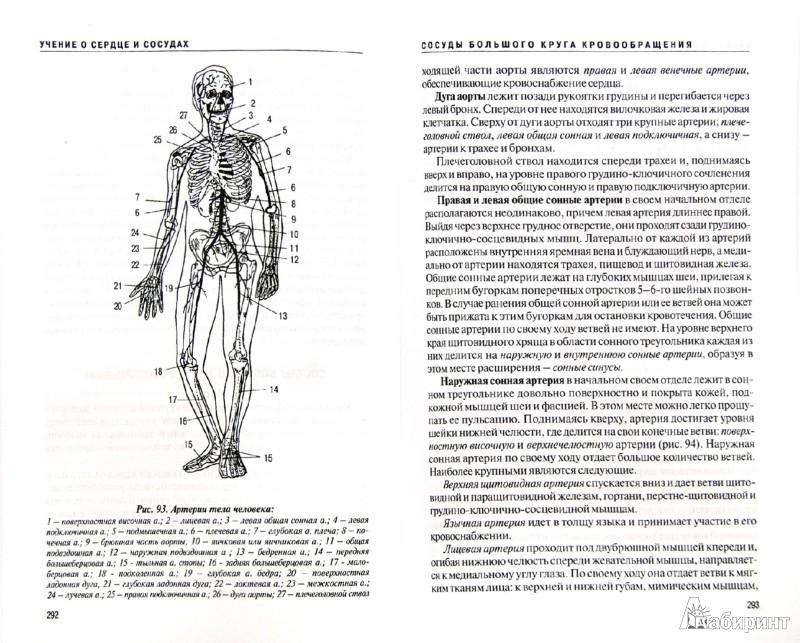 Иллюстрация 1 из 15 для Анатомия человека (с основами динамической и спортивной морфологии). Учебник - Михаил Иваницкий | Лабиринт - книги. Источник: Лабиринт