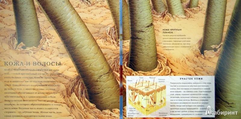 Иллюстрация 1 из 14 для Панорамы. Тело человека - Николас Харрис | Лабиринт - книги. Источник: Лабиринт