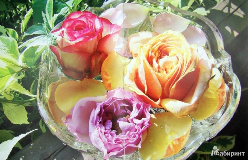 Иллюстрация 1 из 19 для Мои прекрасные цветы - Шахова, Земская | Лабиринт - книги. Источник: Лабиринт
