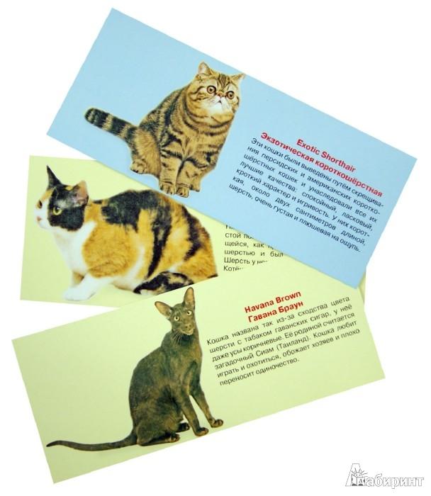 Иллюстрация 1 из 5 для Набор карточек. Узнай киску | Лабиринт - книги. Источник: Лабиринт