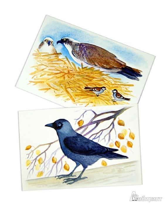 Иллюстрация 1 из 38 для Птички их привычки. А знаете ли вы? - Юлия Маслова   Лабиринт - книги. Источник: Лабиринт
