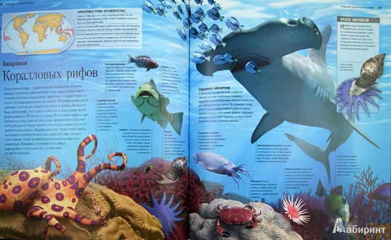 Иллюстрация 1 из 13 для Легенды и чудеса океана - Лампкин, Макмиллан, Музик   Лабиринт - книги. Источник: Лабиринт