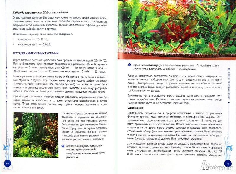 Иллюстрация 1 из 10 для Аквариум для начинающих. Выбор и содержание - Владимир Круковер | Лабиринт - книги. Источник: Лабиринт