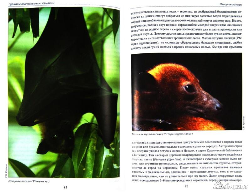 Иллюстрация 1 из 18 для Летучие мыши. Происхождение, места обитания, тайны образа жизни - Сергей Крускоп | Лабиринт - книги. Источник: Лабиринт
