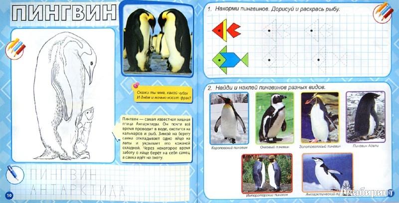 Иллюстрация 1 из 8 для Животные разных широт | Лабиринт - книги. Источник: Лабиринт