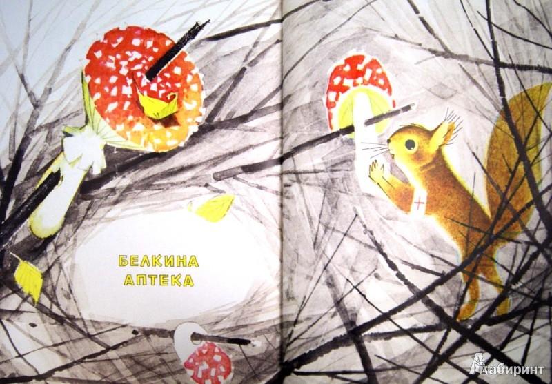 Иллюстрация 1 из 21 для Если в лесу сидеть тихо-тихо - Сюзанна Бялковская | Лабиринт - книги. Источник: Лабиринт