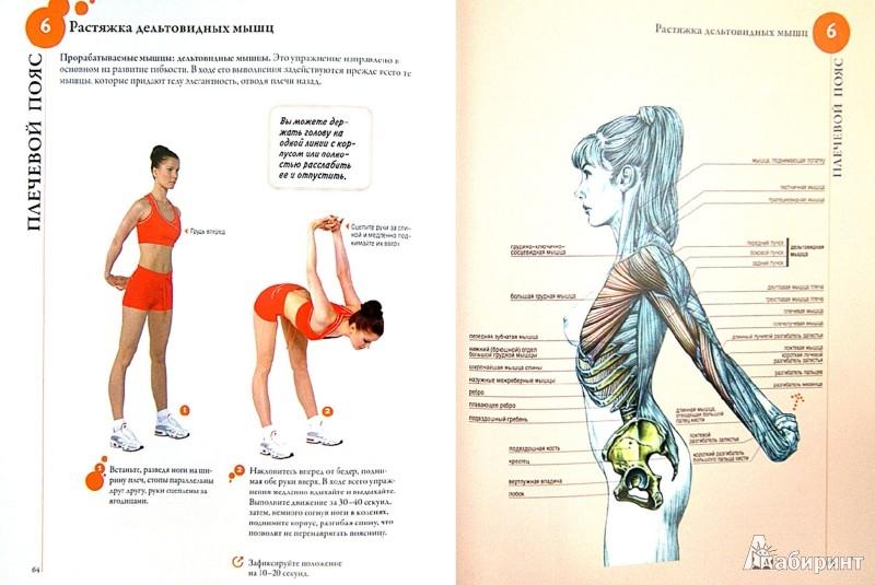 Иллюстрация 1 из 31 для Анатомия фитнеса - Клемансо, Делавье | Лабиринт - книги. Источник: Лабиринт