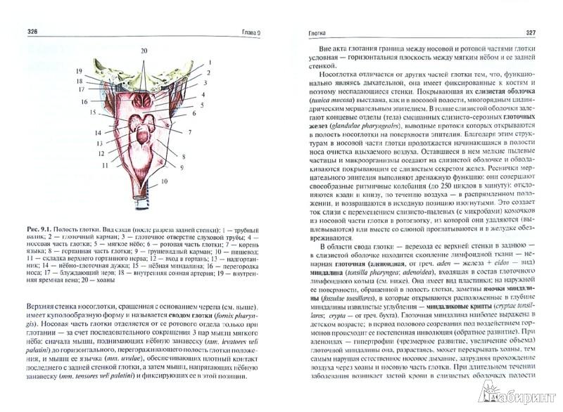 Иллюстрация 1 из 4 для Анатомия головы и шеи. Введение в клиническую анатомию. Учебное пособие - Баженов, Калиниченко | Лабиринт - книги. Источник: Лабиринт