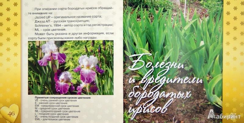 Иллюстрация 1 из 16 для Ирисы. Золотая коллекция цветов | Лабиринт - книги. Источник: Лабиринт