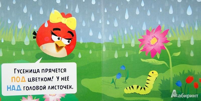 Иллюстрация 1 из 16 для Angry Birds. Кто, где, куда? | Лабиринт - книги. Источник: Лабиринт
