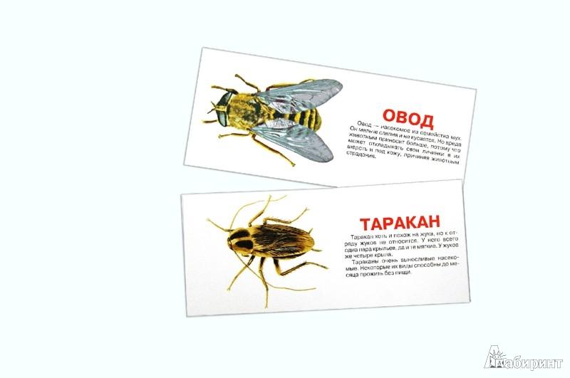 Иллюстрация 1 из 4 для Насекомые. Набор карточек | Лабиринт - книги. Источник: Лабиринт