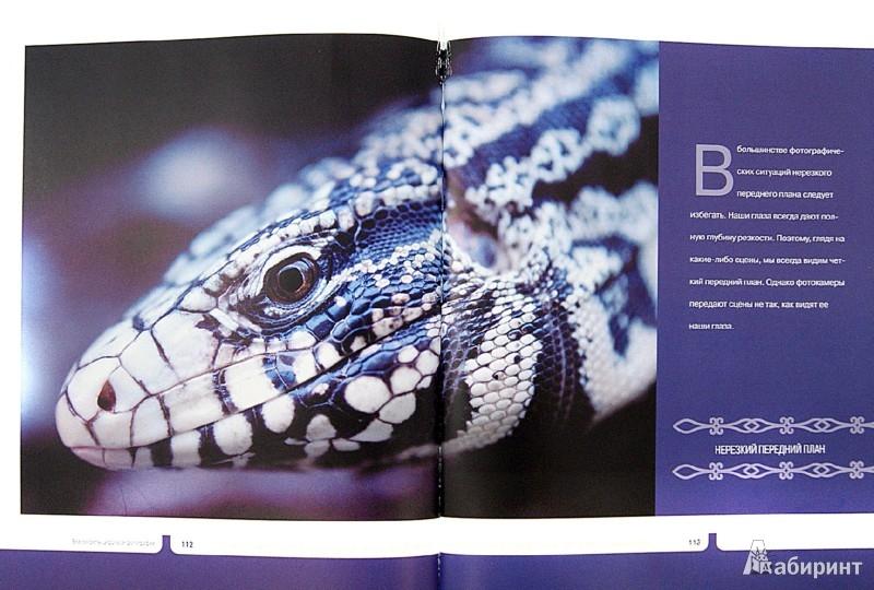 Иллюстрация 1 из 11 для Все секреты цифровой фотографии. Как сделать суперкадр - Джим Цукерман | Лабиринт - книги. Источник: Лабиринт