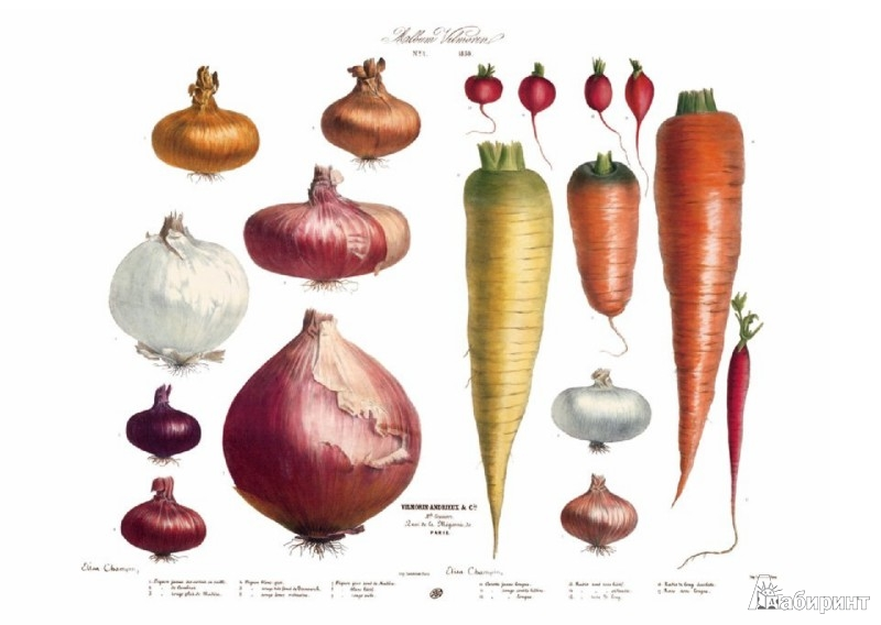 Иллюстрация 1 из 6 для Album Vilmorin. The Vegetable Garden - Werner Dressendorfer | Лабиринт - книги. Источник: Лабиринт