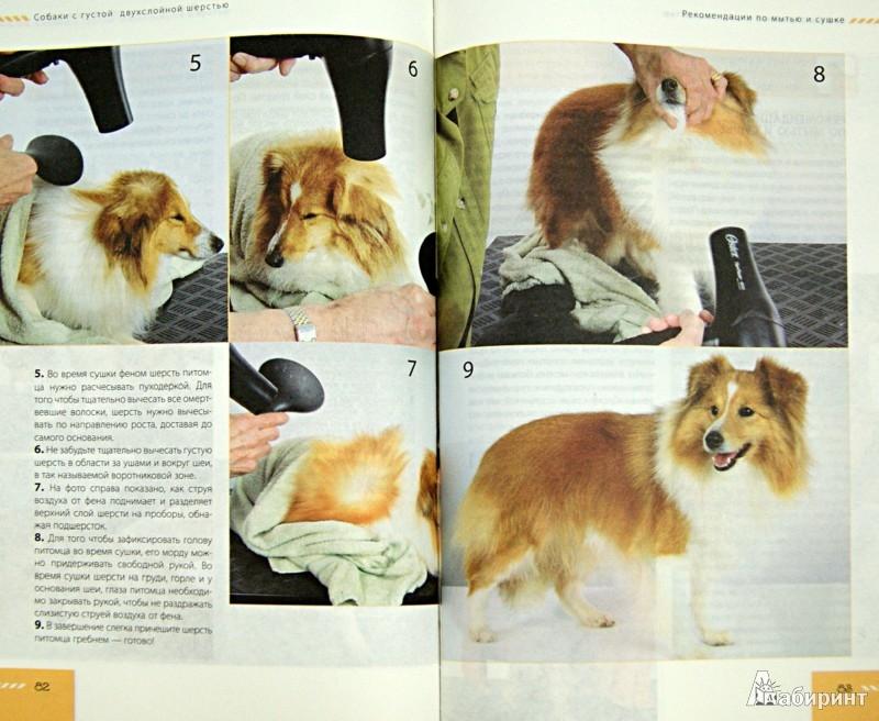 Иллюстрация 1 из 8 для Профессиональный уход за собакой в домашних условиях - Питер Янг | Лабиринт - книги. Источник: Лабиринт