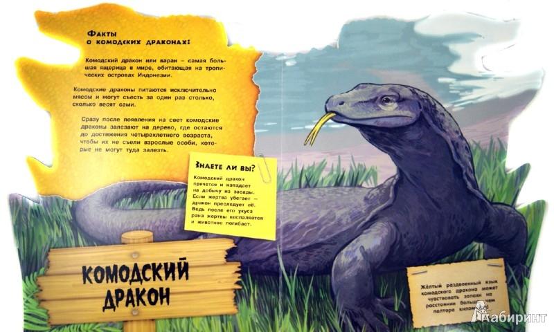 Иллюстрация 1 из 16 для Дикие животные. Необычные ящерицы | Лабиринт - книги. Источник: Лабиринт