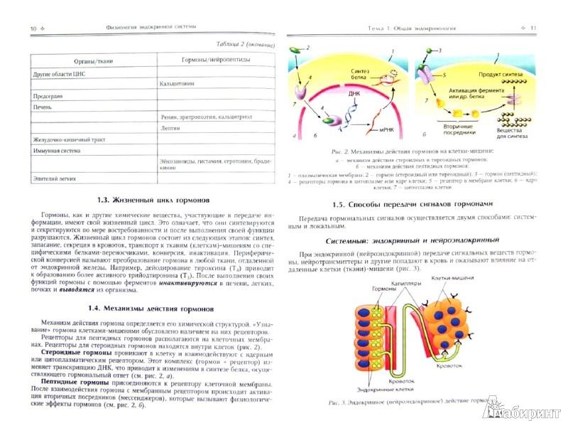 Иллюстрация 1 из 13 для Физиология эндокринной системы. Учебное пособие - Парийская, Ерофеев | Лабиринт - книги. Источник: Лабиринт