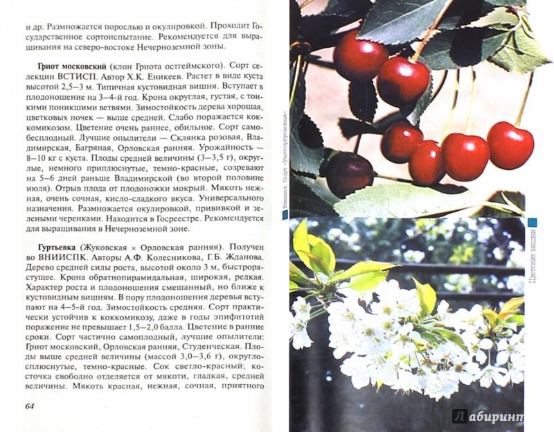 Иллюстрация 1 из 16 для Вишня и черешня - Михеев, Ревякина | Лабиринт - книги. Источник: Лабиринт