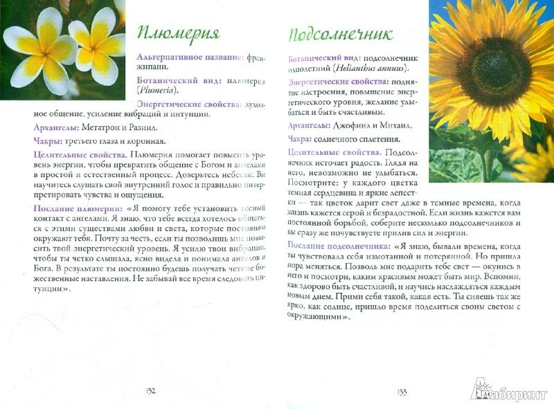 Иллюстрация 1 из 24 для Цветочная терапия - Вирче, Ривс | Лабиринт - книги. Источник: Лабиринт