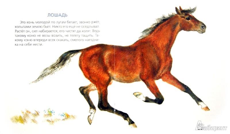 Иллюстрация 1 из 28 для На нашем дворе - Евгений Чарушин | Лабиринт - книги. Источник: Лабиринт