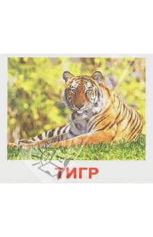 Комплект карточек Дикие животные, с фактами Мини-40 вундеркинд с пелёнок развивающее лото животные