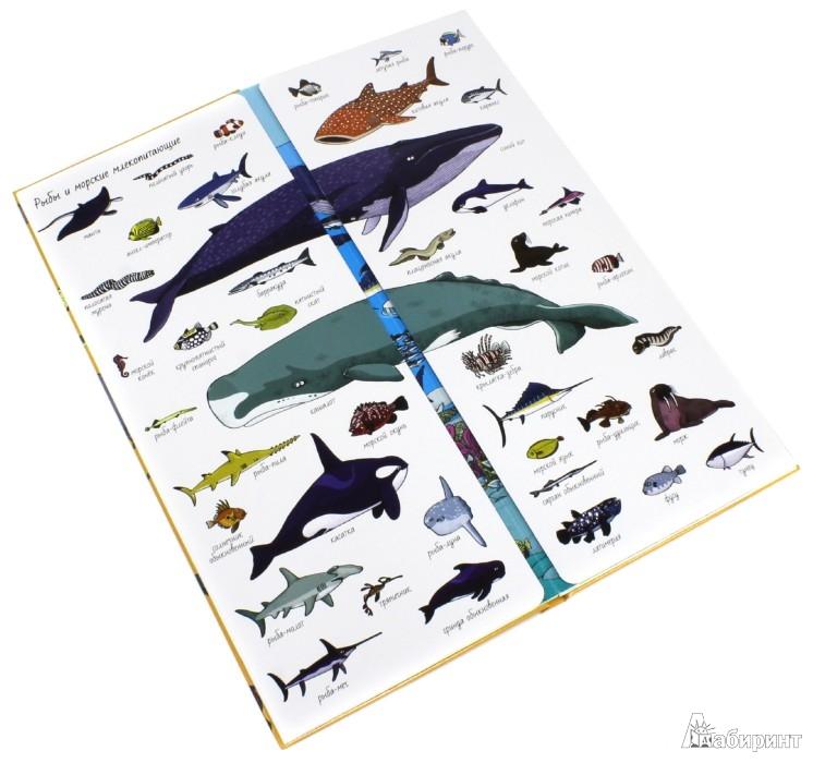 Иллюстрация 1 из 70 для Найди и покажи. Мир животных - Лаваль, Кувэн | Лабиринт - книги. Источник: Лабиринт