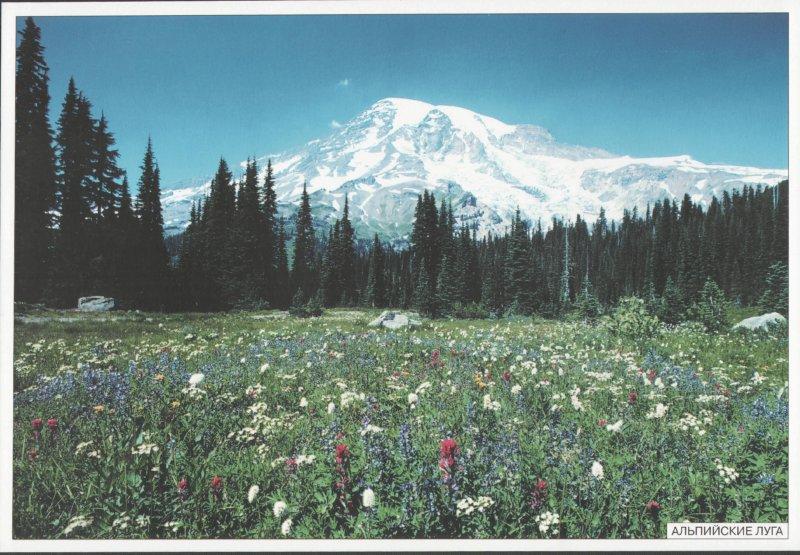 Иллюстрация 1 из 13 для Мир в картинках. Высоко в горах. Наглядно-дидактическое пособие. 3-7лет   Лабиринт - книги. Источник: Лабиринт