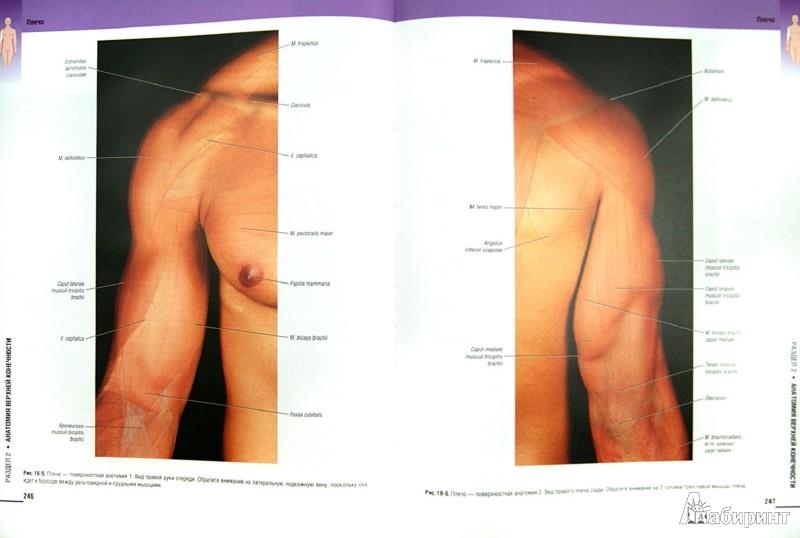 Иллюстрация 1 из 4 для Атлас клинической анатомии - Мозес, Бэнкс, Нава, Петерсен   Лабиринт - книги. Источник: Лабиринт