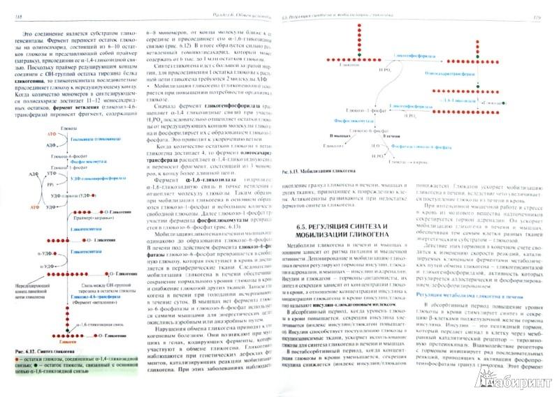 Иллюстрация 1 из 5 для Биохимия с упражнениями и задачами: учебник (+CD) - Северин, Глухов, Голенченко   Лабиринт - книги. Источник: Лабиринт