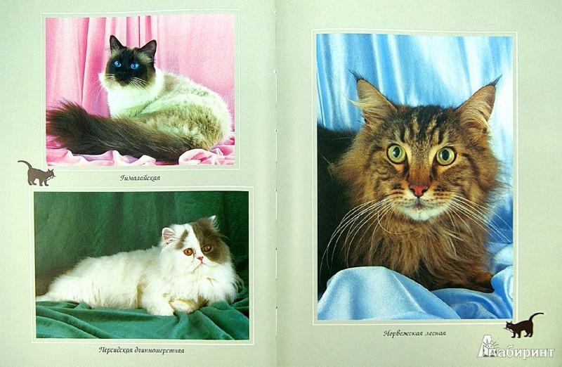 Иллюстрация 1 из 15 для Все о кошке. Породы, содержание, питание - Дарья Дазидова   Лабиринт - книги. Источник: Лабиринт