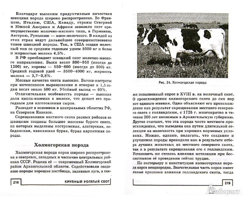Иллюстрация 1 из 23 для Эффективное ведение приусадебного хозяйства. Как увеличить свой доход - Сергей Малай | Лабиринт - книги. Источник: Лабиринт