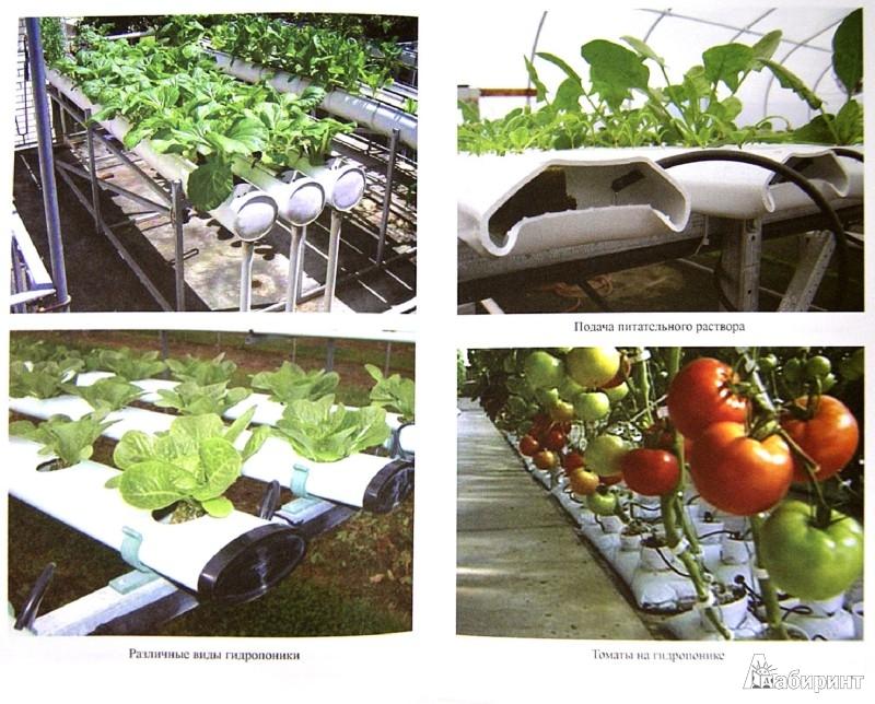 Иллюстрация 1 из 31 для Урожайные теплицы и парники. Своими руками - Сергей Малай | Лабиринт - книги. Источник: Лабиринт
