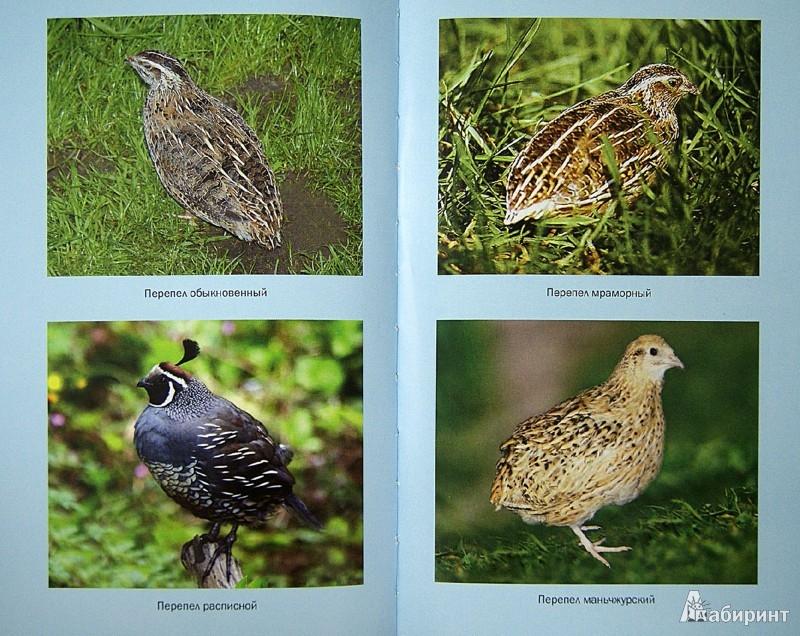 Иллюстрация 1 из 6 для Содержание и разведение домашней птицы - Балашов, Жмакин, Колпакова | Лабиринт - книги. Источник: Лабиринт