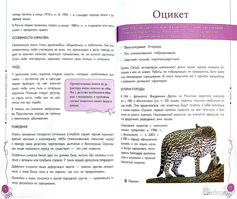 Иллюстрация 1 из 13 для Все породы кошек - Ольга Замятина | Лабиринт - книги. Источник: Лабиринт
