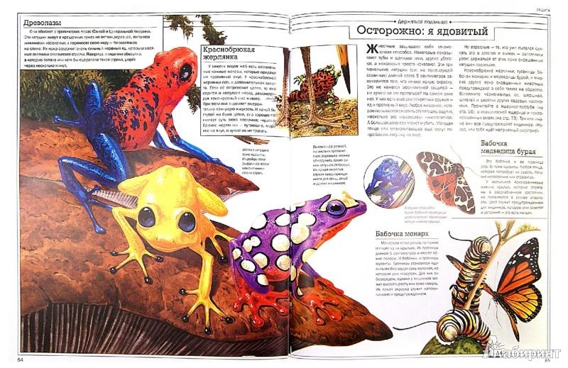 Иллюстрация 1 из 7 для Тайны живого мира. Иллюстрированная детская энциклопедия - Стоунхауз, Бертрам | Лабиринт - книги. Источник: Лабиринт