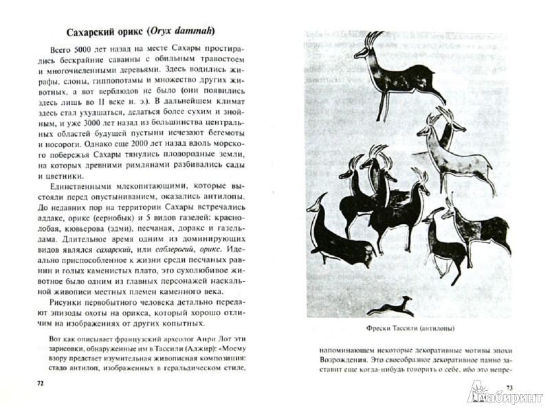 Иллюстрация 1 из 25 для Самые необычные животные - Дмитрий Бердышев | Лабиринт - книги. Источник: Лабиринт