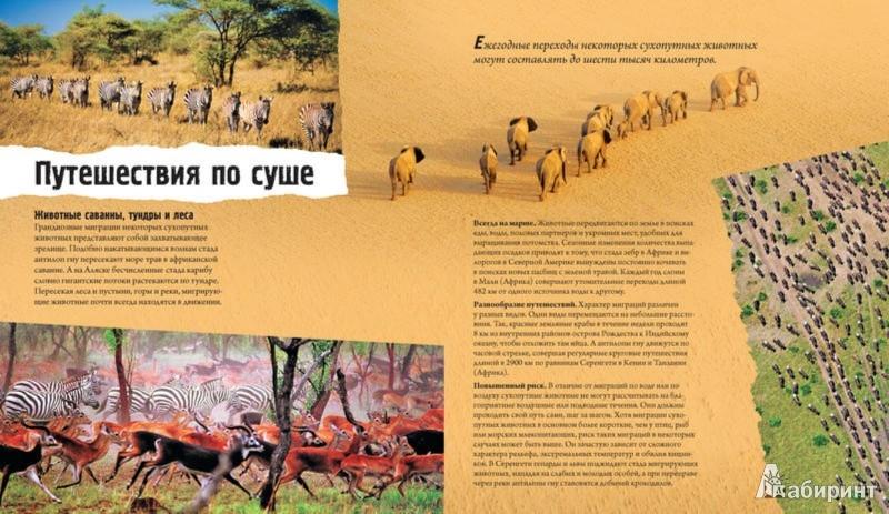 Иллюстрация 1 из 22 для Животные-путешественники - Дуайт Холинг   Лабиринт - книги. Источник: Лабиринт