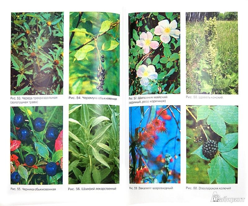 Иллюстрация 1 из 16 для Современная фитотерапия - Сергей Турищев | Лабиринт - книги. Источник: Лабиринт