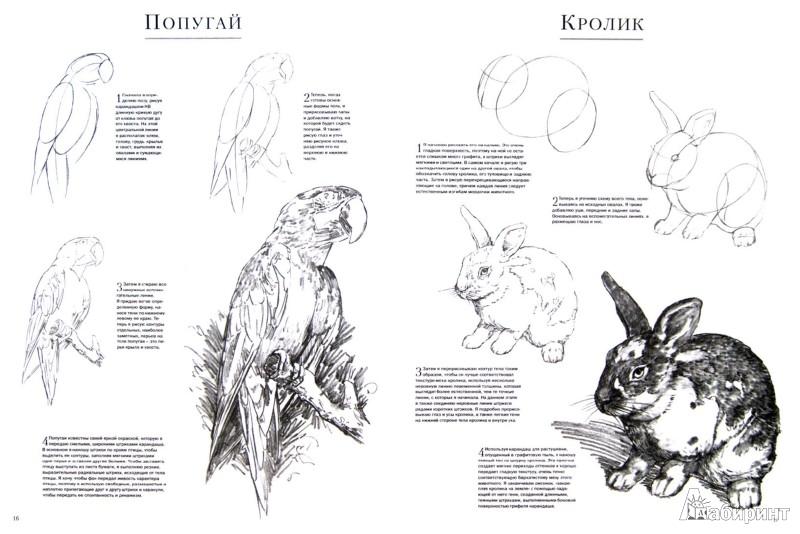 Иллюстрация 1 из 15 для Домашние животные - Миа Тавонатти | Лабиринт - книги. Источник: Лабиринт
