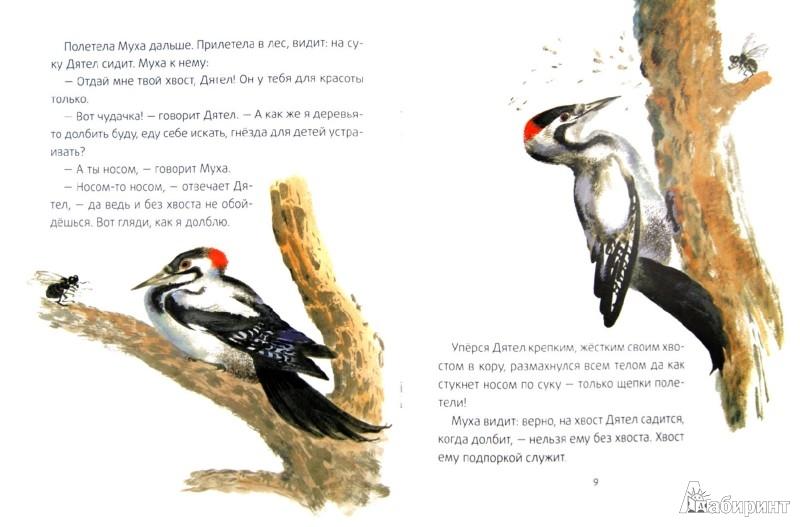 Иллюстрация 1 из 29 для Хвосты - Виталий Бианки | Лабиринт - книги. Источник: Лабиринт