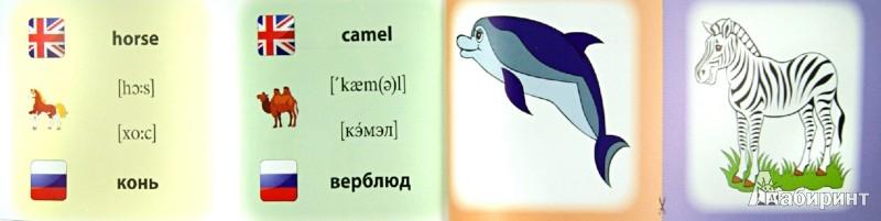Иллюстрация 1 из 31 для Животные. Коллекция карточек - Л. Зиновьева | Лабиринт - книги. Источник: Лабиринт