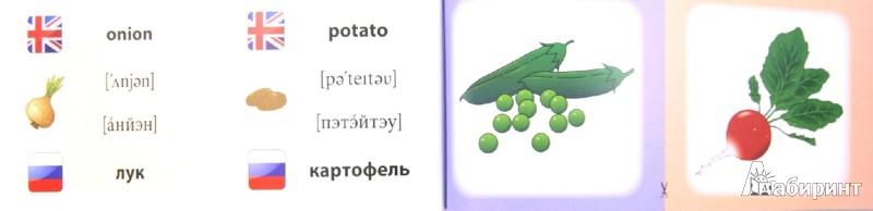 Иллюстрация 1 из 17 для Овощи. Фрукты. Коллекция карточек - Лариса Зиновьева | Лабиринт - книги. Источник: Лабиринт