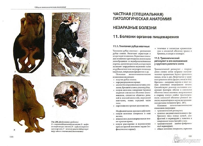 Иллюстрация 1 из 14 для Патоморфологическая диагностика болезней животных. Атлас-альбом - Белкин, Жаров, Прудников | Лабиринт - книги. Источник: Лабиринт