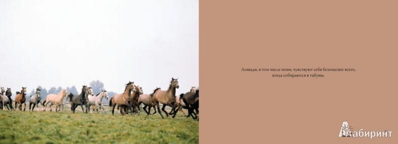 Иллюстрация 1 из 20 для Лошади. Сила и грация - Kristin Maffei | Лабиринт - книги. Источник: Лабиринт