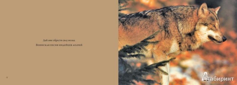 Иллюстрация 1 из 15 для Волки. Хищные и свободные - Rose Amber | Лабиринт - книги. Источник: Лабиринт