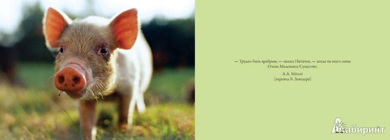 Иллюстрация 1 из 24 для Детеныши. Наивные и смешные - Марджори Гален | Лабиринт - книги. Источник: Лабиринт