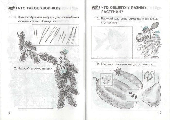 Иллюстрация 1 из 20 для Окружающий мир. Проверим себя. Тетрадь для учащихся 1 класса начальной школы - Андрей Плешаков | Лабиринт - книги. Источник: Лабиринт