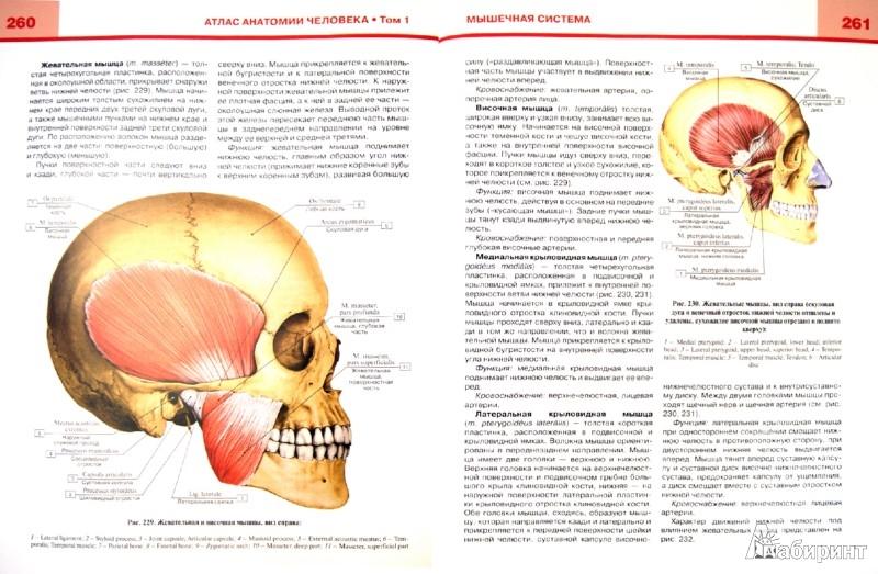 Иллюстрация 1 из 23 для Атлас анатомии человека. В 3-х томах. Том 1. Учебное пособие - Билич, Николенко | Лабиринт - книги. Источник: Лабиринт